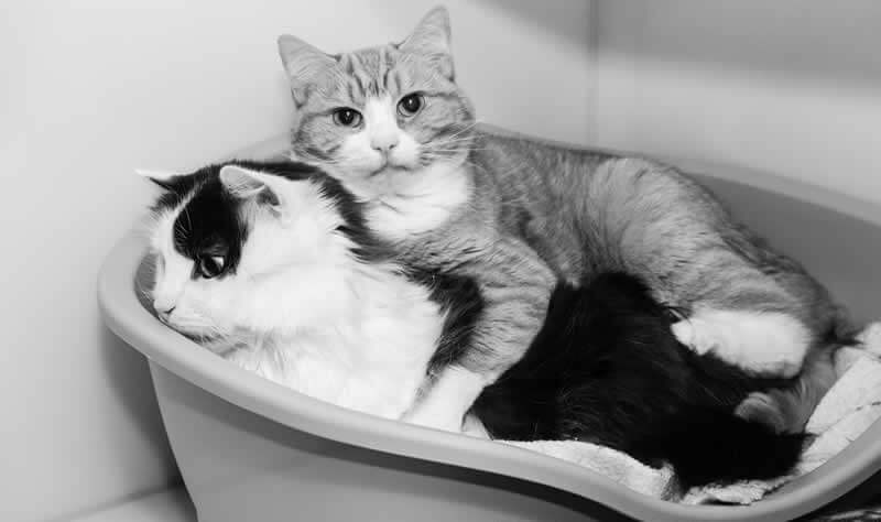 Two cats in their bed image