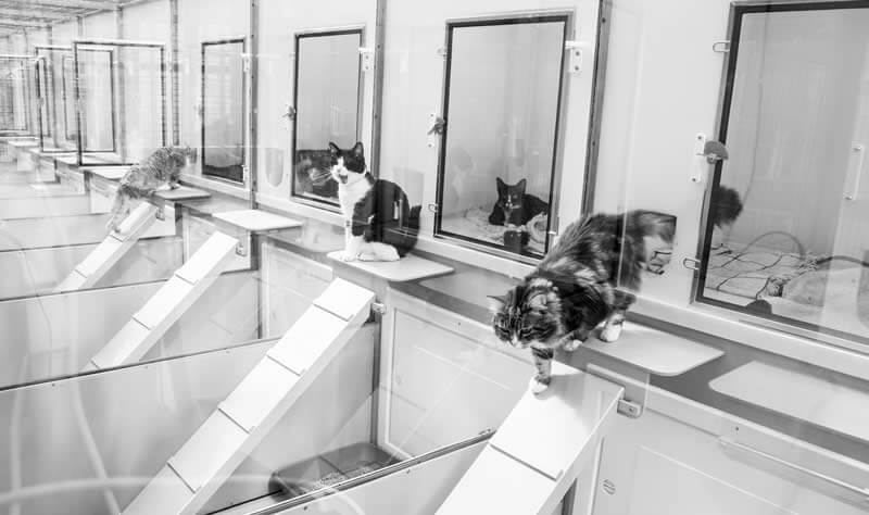 Village Vet Cattery in St Albans image