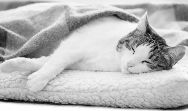 Happy sleeping cat image